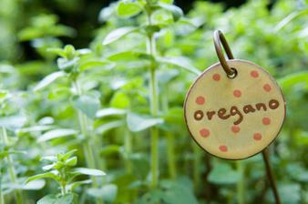 Риган - ароматна билка с широко приложение