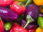 Бързи зеленчукови гювечета