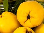 Дюли - ароматът на есента
