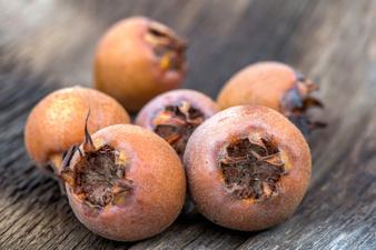 Мушмула - непопулярният плод