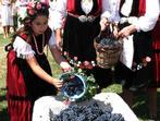 Българските сортове грозде - за чудно вино