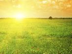Напролет с полет: Всичко за витамин D