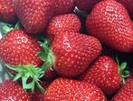 Плод ли е ягодата и защо семките й са отвън?