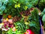 Съветите на Люба: Правилно съхранение на храна