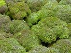 Топ 10 храни с отрицателен калориен баланс