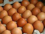 5 факта за яйцата, които не знаехме