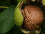 Орехите всъщност не са богати на йод?