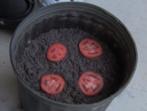 Най-лесният начин да си направим разсад за домати