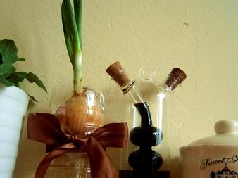 Отгледайте пресен лук в бутилка