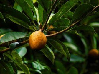 Най-екзотичните плодове от Азия