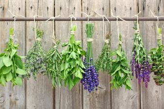 8 билки, коя от коя по-полезна